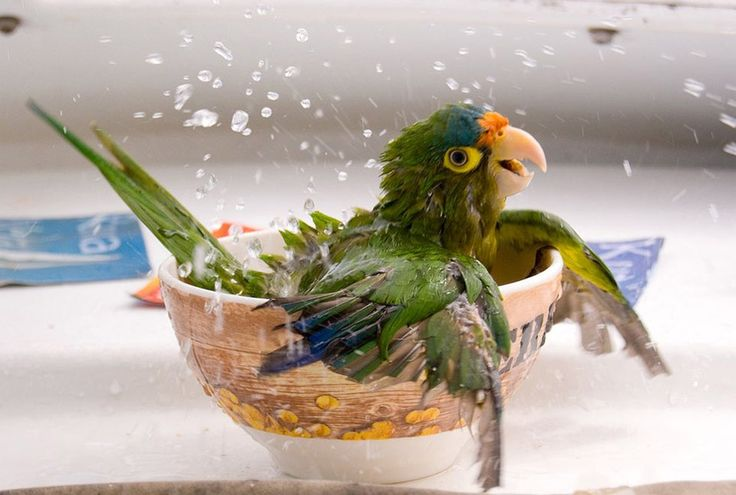 Bathing Parrot (x-post /r/MostBeautiful) http://ift.tt/2mZiNi9