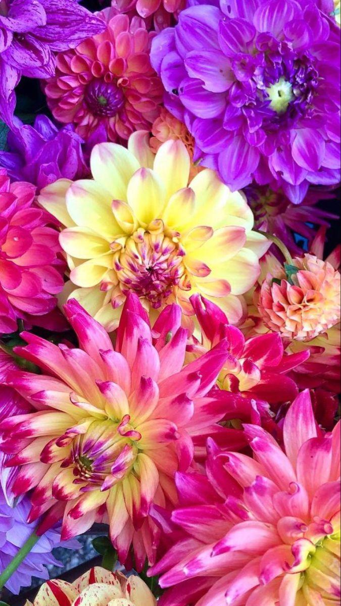 Flowers Near Me In 2021 Beautiful Flowers Flowers Where To Buy Flowers