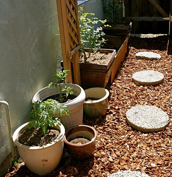 Container Garden - How to Get Started