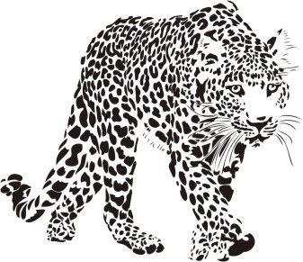 Dzikie koty 24 - lampart
