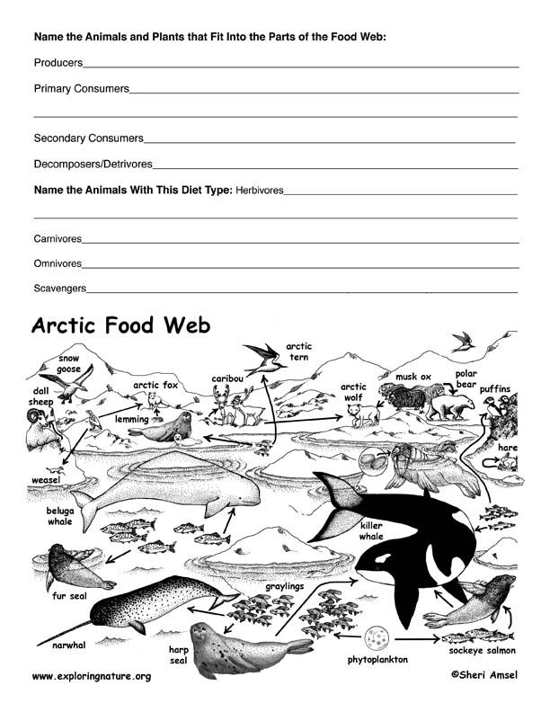 Worksheet Food Webs For Kindergarten Students 102 best food web images on pinterest school teaching science arctic tundra activity