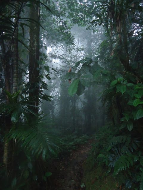 #Colombia, #CiudadPerdida, #LostCity #trek, #jungle Day 3 | FILIP ZIOLKOWSKI :: Awakening On The Road http://filipontheroad.com/2014/02/colombia-ciudad-perdida-lost-city-trek_25.html