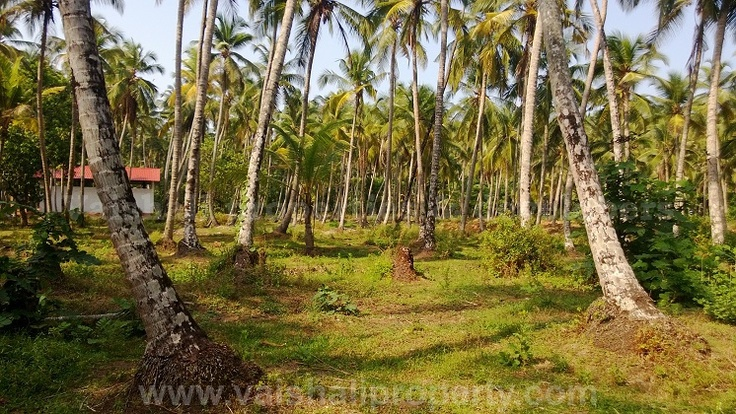 1.25 acres land for sale in near Beypore, Calicut. This plain & flat land is suitable for both residential as well as commercial projects.The site is only 1 km from Beypore port and only 100 mtrs from bus route.