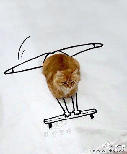 Читай книги, занимайся спортом, как кот :) Кот, смешные картики