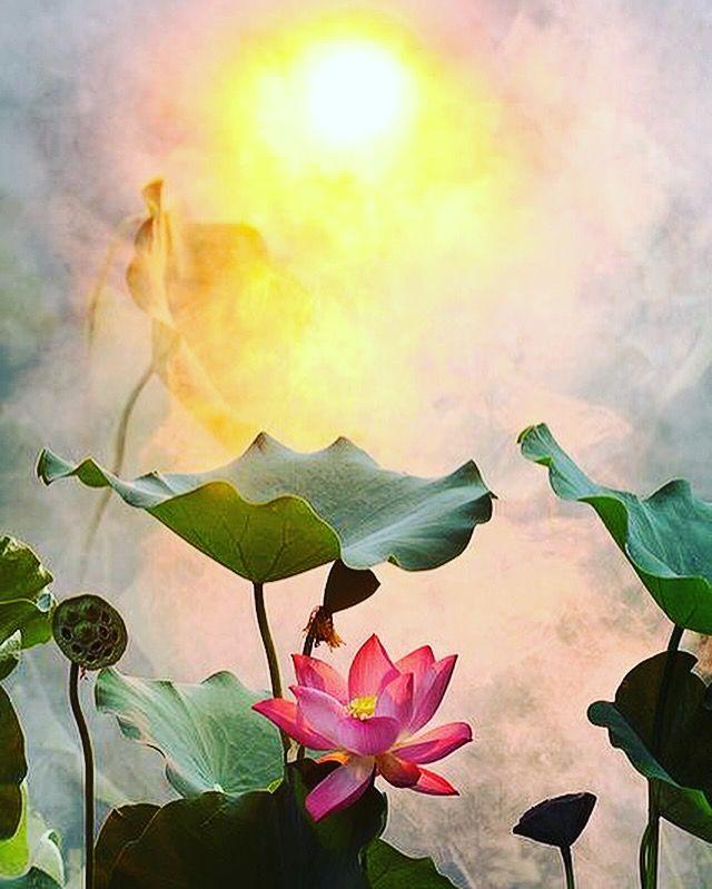 """""""Vandaag is een Mooie Dag om het Verstand en het Hart Open te Zetten, om een Positieve Houding te kunnen Blijven Houden. Maakt het Mogelijk over de Grenzen van je Problemen Heen te Kijken, naar de Andere Kant van de Wolken, die je Scheiden van de Zon"""" SoeReiMas Wonders & Writings"""
