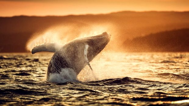 David Howells was a celebrated photographer of celebrities, politicians and other well-known faces. That is, until he was seduced by whales.