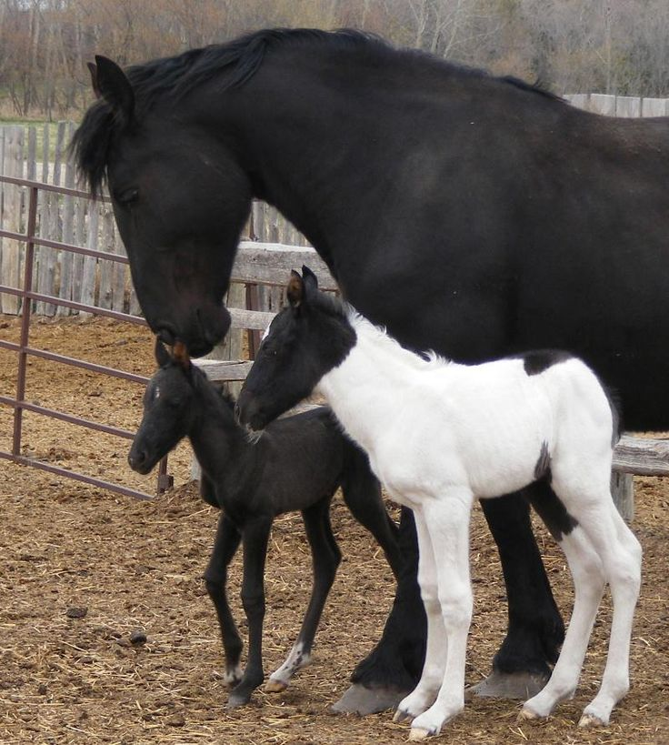 Twin Horses Foals | Twin Foals born at Twin Valley Ranch