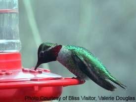 Best 25 hummingbird food recipes ideas on pinterest hummingbird best 25 hummingbird food recipes ideas on pinterest hummingbird feeder food hummingbird food diy and hummingbird food forumfinder Gallery