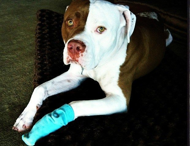 Because trying to keep a bandage over a dog's paw is a drag, here's the deal with cracked paw pads.