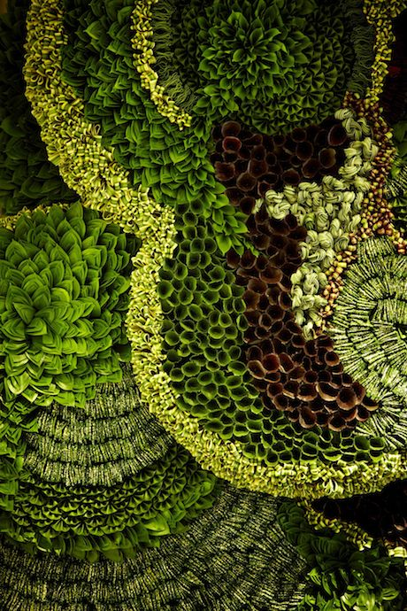 "Azuma Makoto's ""The Art of Plants"""