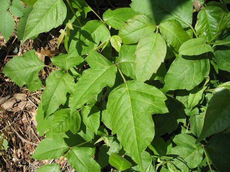 saw these by my house D:           ( poison ivy )