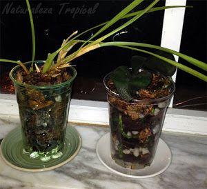Vasos con sustrato para cultivar orquídeas jóvenes