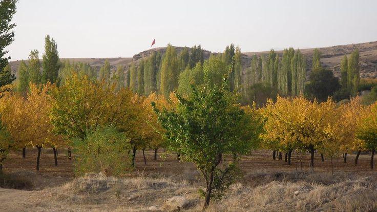 Elbistan-Hacıhasanlı köyü, Oluklu da bayrak ve kalenin, Sonbahar da bahçelerin Sarı renge bürünmüş görüntüsü