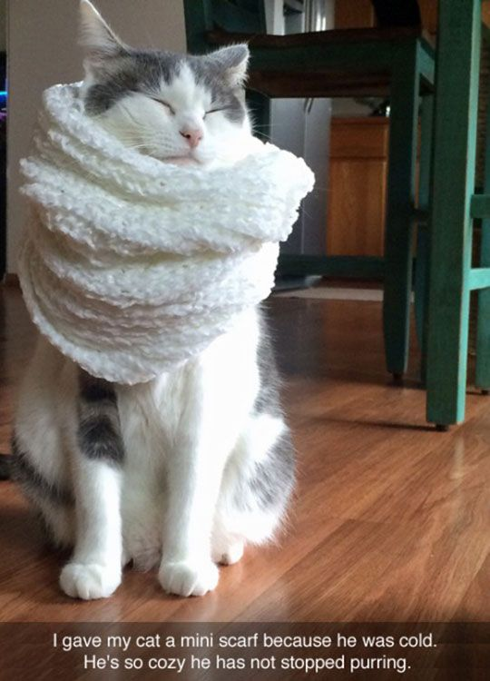 """Cozy Cat Scarf - Try this sometime:  tie a scarf of other unfamiliar thing around a cat's middle.  Some cats seem to become """"fainting goats"""" and simply fall over.  Not all cats react this way, but mine do."""