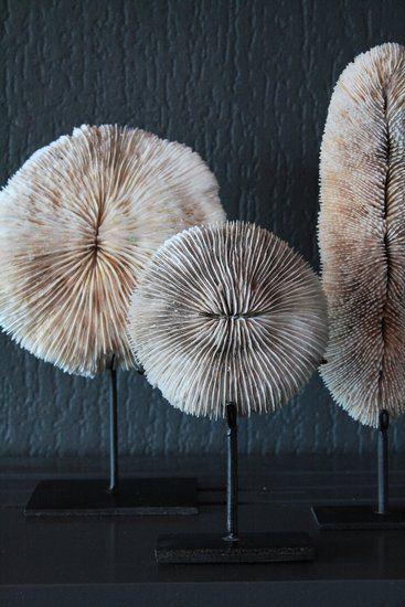 Rond wit stuk koraal op metalen voetje.