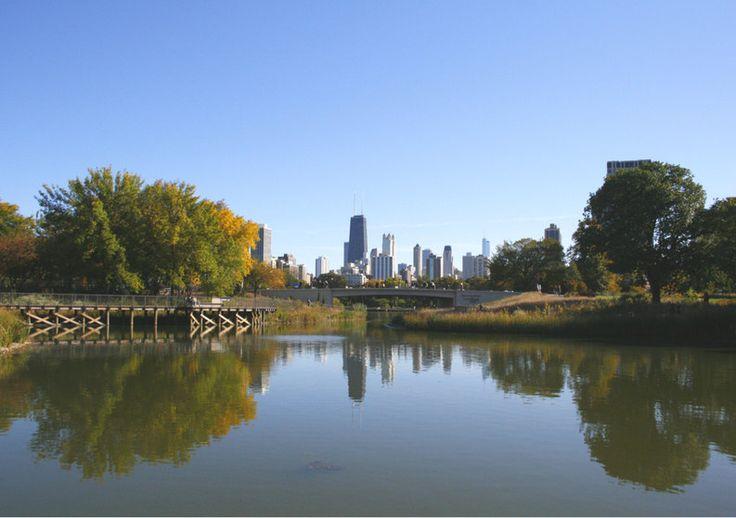 Chicago's skyline from the Zoo   Travel Photography di TheItalianWanderer su…