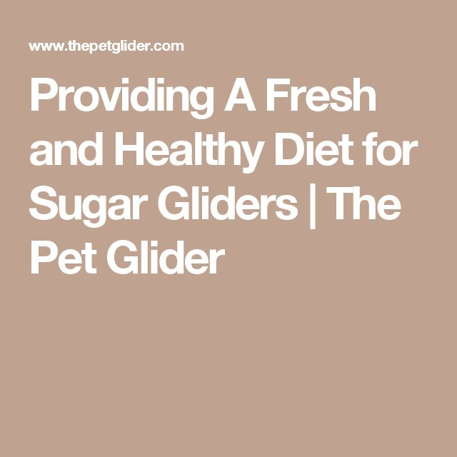 Providing A Fresh and Healthy Diet for Sugar Gliders | The Pet Glider