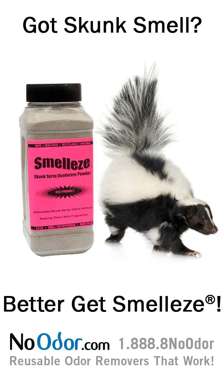 best 25 skunk smell ideas on pinterest skunk spray dog skunk