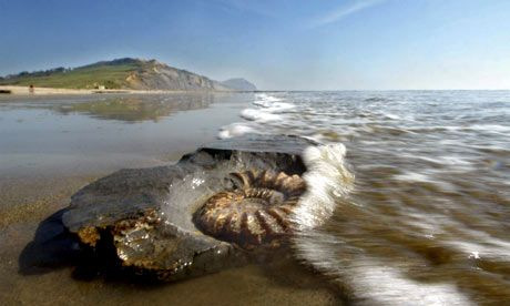 An expert's and readers' tips: best beaches for fossil hunting in the UK
