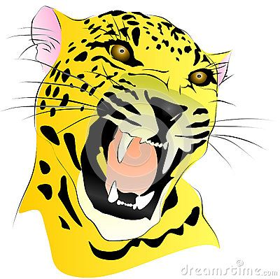 Colored vector drawing a leopard without background.