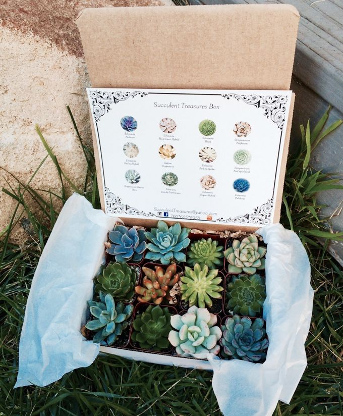 a box of succulents that looks like a treasure box of candy!