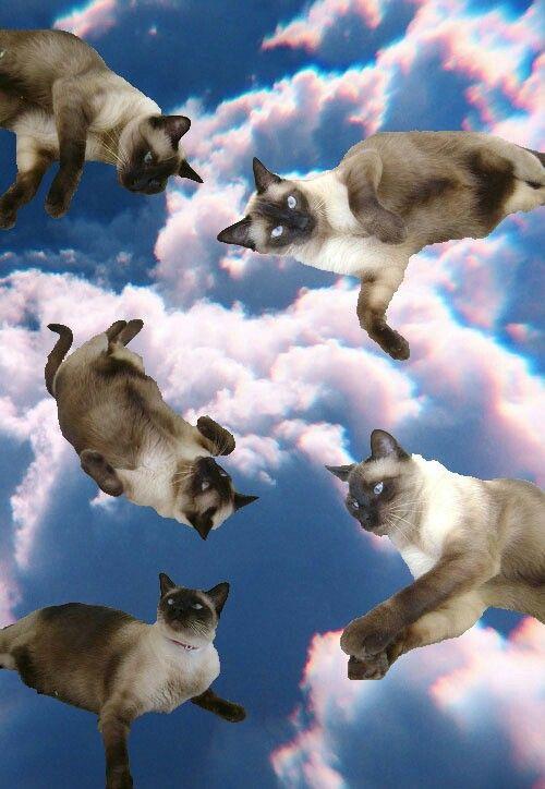 Meow meow.