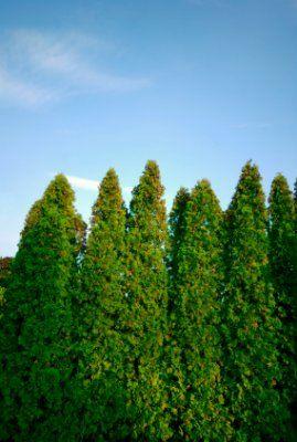 11 Best Sound Barrier Wall Images On Pinterest Backyard
