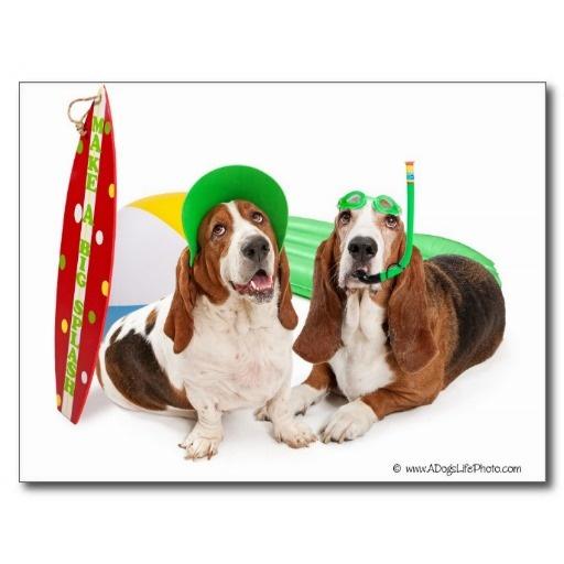 Arizona Basset Hound Rescue June Post Card
