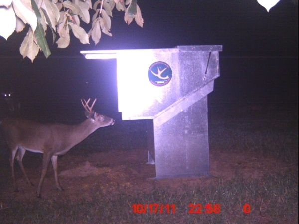 "Please check out several videos of our Double ""D"" Gravity Deer Feeders in action.  http://huntdead.net/"