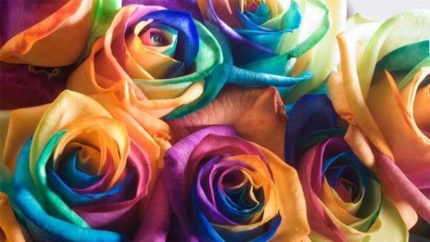 Rainbow Roses: il mazzo di rose ora è arcobaleno