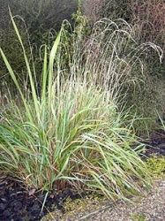 """Karetu means """"sweet scented, holy grass"""". Legend tells us that, a beautiful ancestress """"Te Atukaweia"""" of Kapotai hapu, Waikare (who once owned and occupied the land of Karetu). She was betrothed to Koikoi, a Warrior of the southern Taou hapu in Tamaki Makaurau. Large quantities of the sweet smelling grass was used to build their whare and the place which was originally called Whakarau was renamed Karetu"""
