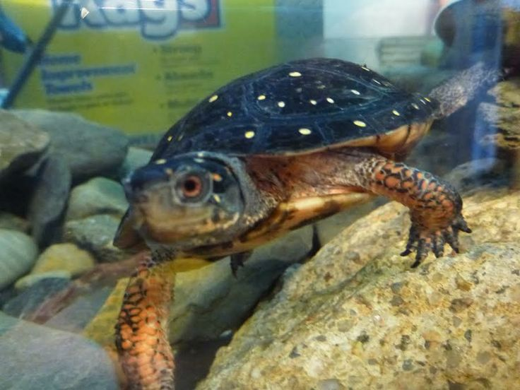 17 Best Images About Critters Of Narragansett Bay On