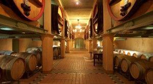 Apprenez les techniques des grands chefs ou tentez une cure de detox dans un cadre apaisant. Et profitez d'un des plus anciens vignobles de France: saviez-vous que les rosés du Var sont les seuls au monde à détenir le titre de « Crus Classés » ? Découvrez trois AOC (Bandol, Côtes de Provence et Coteaux Varois) et la richesse de ce terroir viticole, en blanc, rosé et rouge, toute l'année.