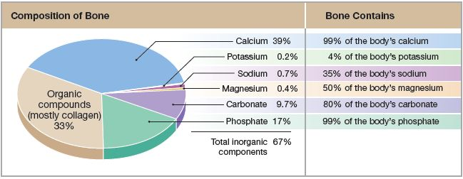 Pie Chart With Chemical Composition Of Bone As Well As The