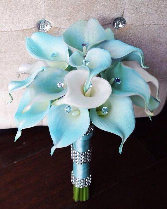 Tiffany Blue Calla Lillie's