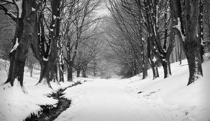 https://flic.kr/p/RaXKAy | Avenue | Green Valley, Malvern looking rather, err...white.  This avenue of trees marks the main way up to Worcestershire Beacon from the town of Great Malvern.    Unfortunately it has been a few years since it looked like this, but maybe there is still time this winter.  Here's hoping, I love snow!