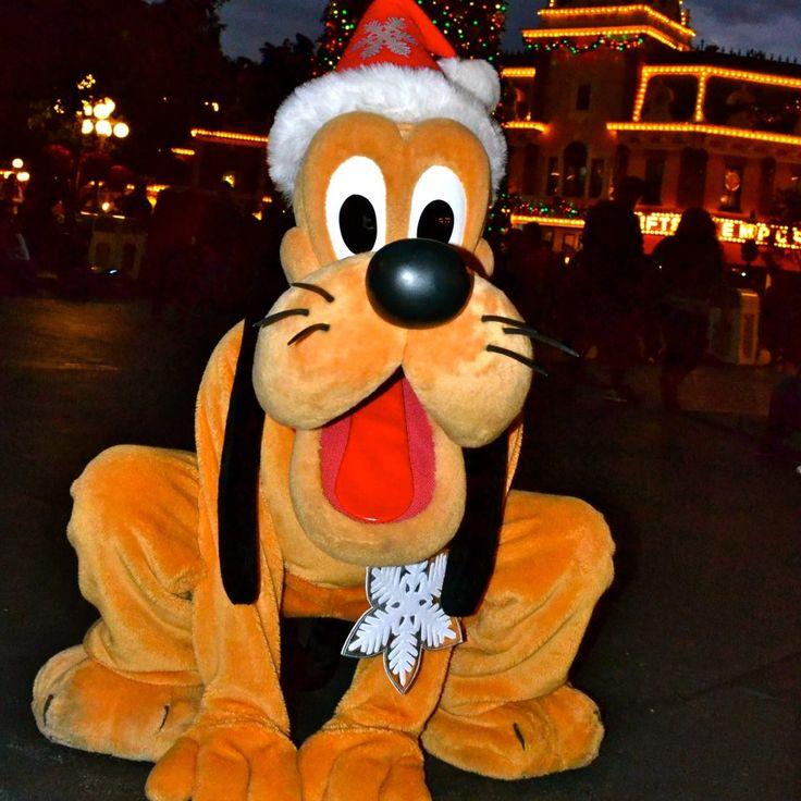 Best Day Ever Dog Disneyland