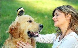 CoolPetZ | Social Pet Network Köpeklerin tüy bakımında doğru tarak kullanımının önemi büyük... #köpek #CoolPetZ
