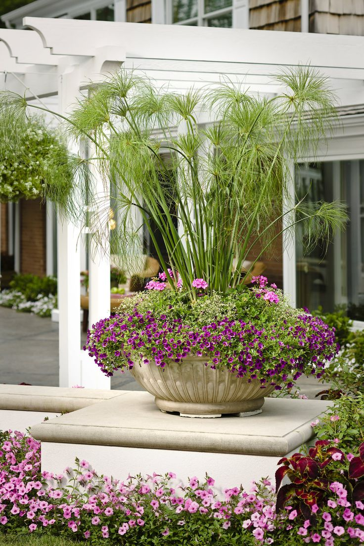 Potted Gardens 97 best container garden recipes images on pinterest container your containers will take on a tropical flair when you use king tut as your thriller potted gardengarden workwithnaturefo