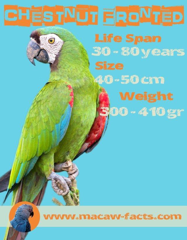 15 best images about Parrots on Pinterest | Parrot facts, Scarlet ...