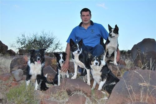 Christoff Vermeulen's Chrisridogs Border Collies. Christoff Vermeulen Cell: 072 4171065 vermeulen.cj@googlemail.com The Border Collies owned and loved by me are working dogs in heart and soul, they live for two things only, to do what they where bred to do, … Continued
