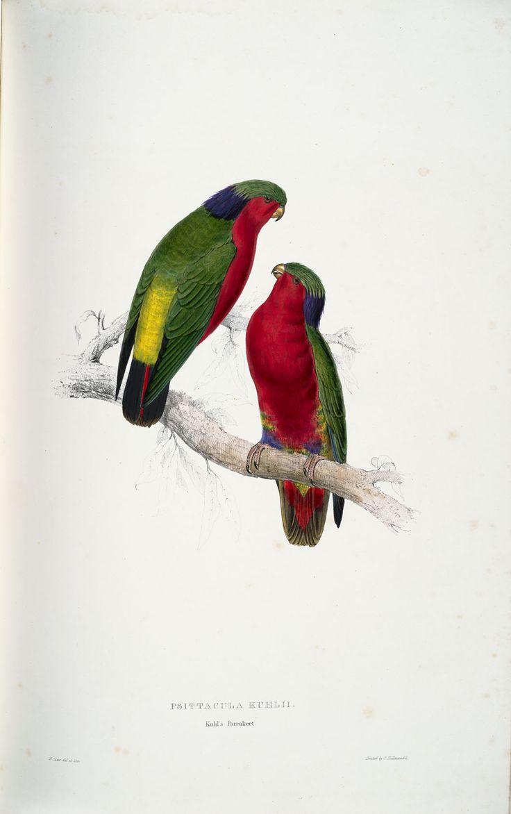 68 best projet perroquet images on pinterest art tattoos