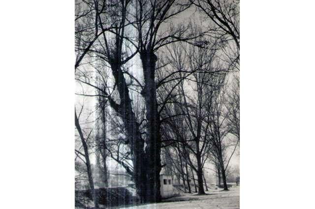 Vă mai amintiți? Batrânul copac de la Grădina Morii în 1987