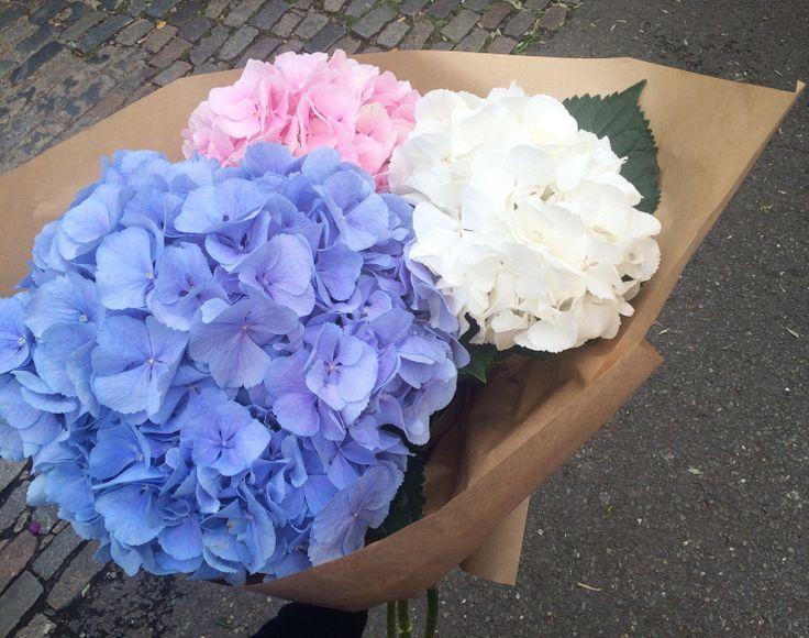 Columbia Road Flower Market | London