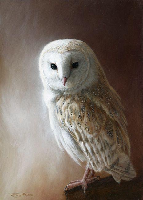 Barn Owl by Wildlife Artist Jeremy Paul