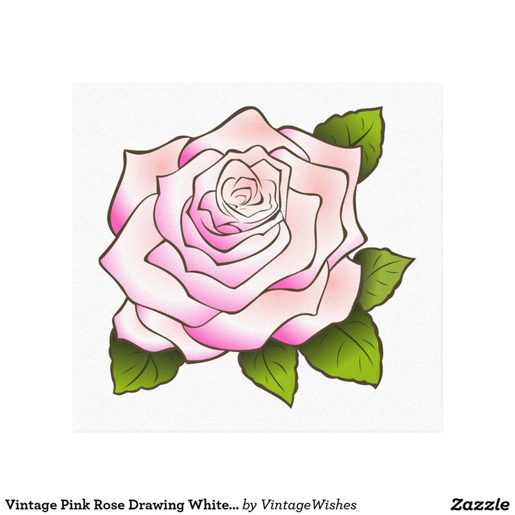 Vintage Pink Rose Drawing White Stretched Canvas - Gallery Wrapped Canvas - #vintagewishes #windywinters #zazzle