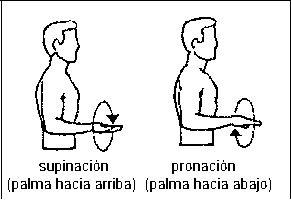 """suprimacion La supinación es la acción o movimiento por el cual el cuerpo humano o alguna de sus partes es colocada en posición de supino, lo que coloquialmente le llamamos """"boca arriba"""". De este modo, la supinación de la palma de la mano implica el movimiento del antebrazo y mano para que la palma quede dirigida hacia arriba."""