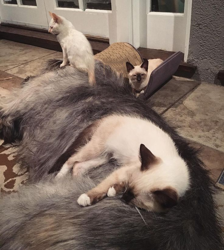 Man Rescued Sick Kitten at the Pound and Went to Get His Sick Siblings Too