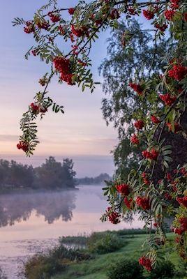 Jukka Risikko - Early autumn morning