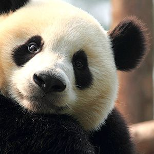 How cute is this guy?  Coolest Up-Close Animal Encounters. Via T+L (www.travelandleisure.com).